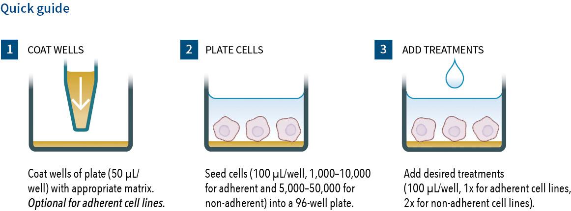 brdu elisa assay protocol Brdu cell proliferation elisa assay cell lines: mcf-7 human breast cancer and k562 human chronic myelogenous leukemia (cml) cell lines from atcc assay format: brdu cell proliferation elisa.