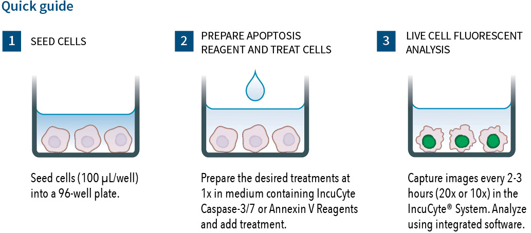 0427-B00-Annexin V Reagents for Apoptosis QuickStart
