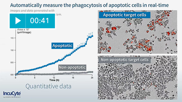 Real-time monitoring of phagocytosis of apoptotic cells using the IncuCyte® live-cell analysis system