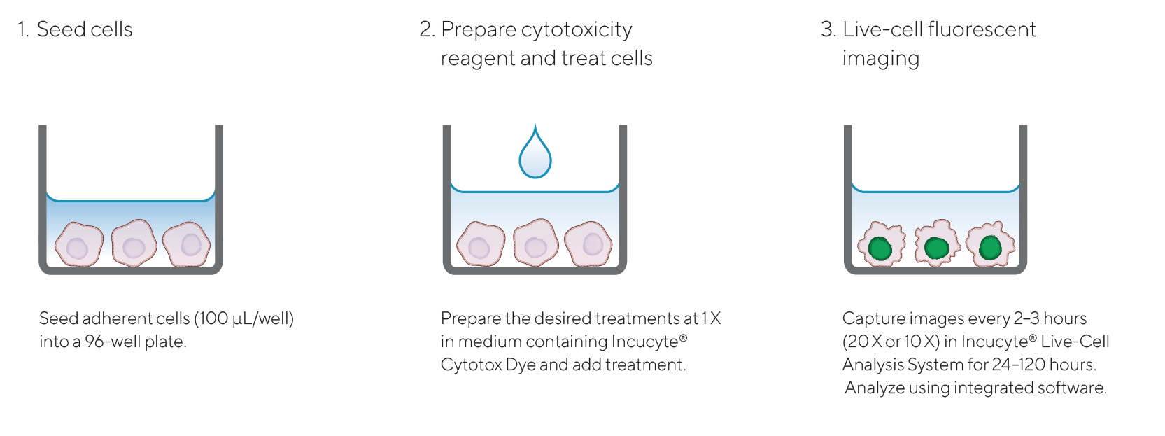 Incucyte® Cytotox Dye Quick Guide