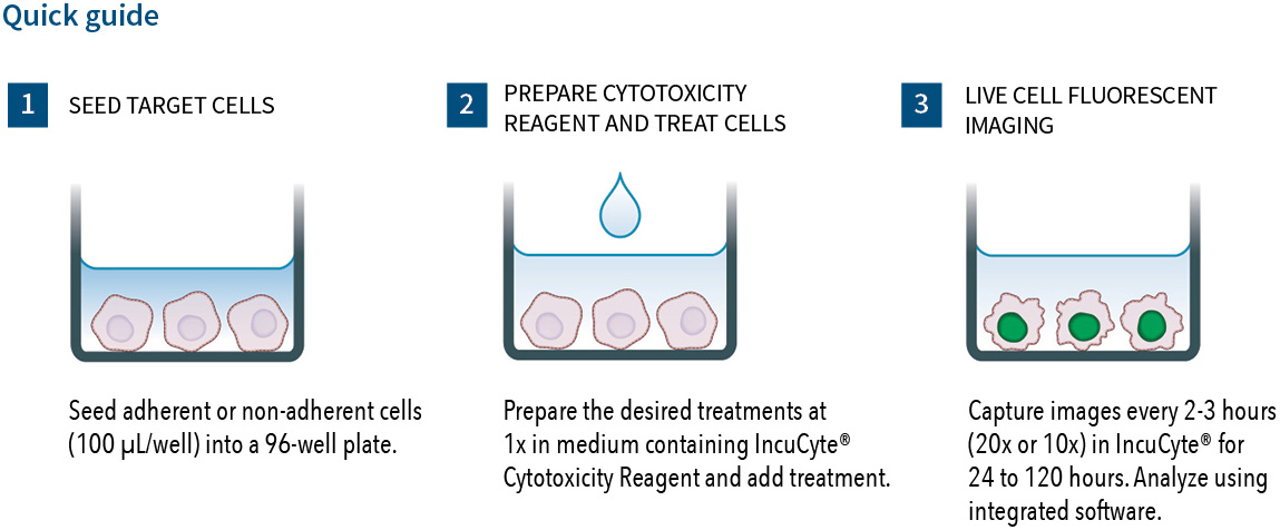 View the IncuCyte cytotoxicity assay protocol