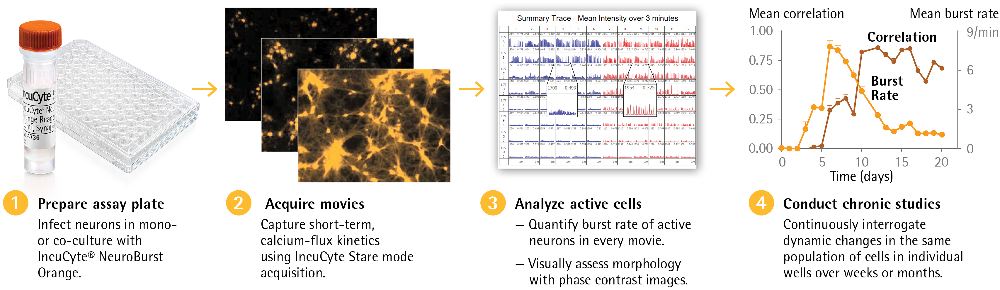 Figure 1 - IncuCyte S3 Neuronal Activity Analysis Software Module