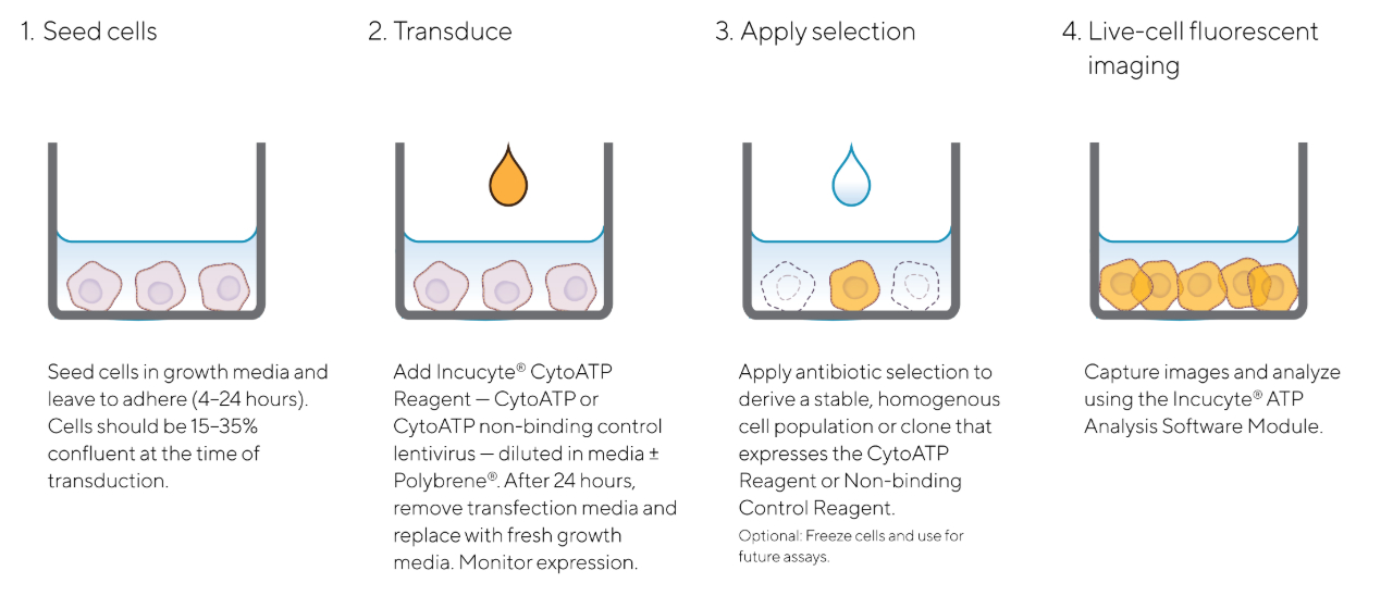 CytoATP Quick Guide