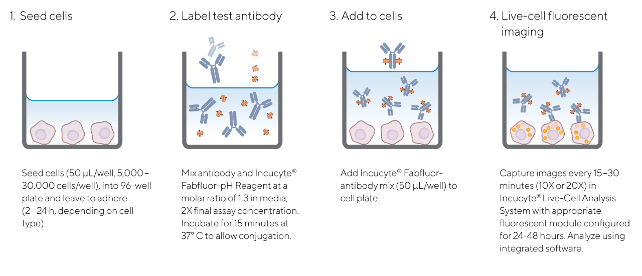 Fabflour-ph Orange Antibody Quick Guide