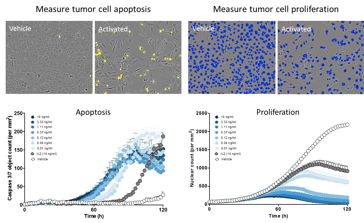 Measure tumor cell death and proliferation in real time