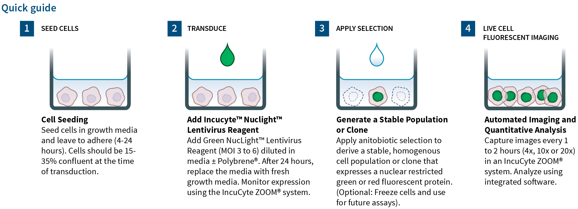 NucLight Lentivirus Reagents
