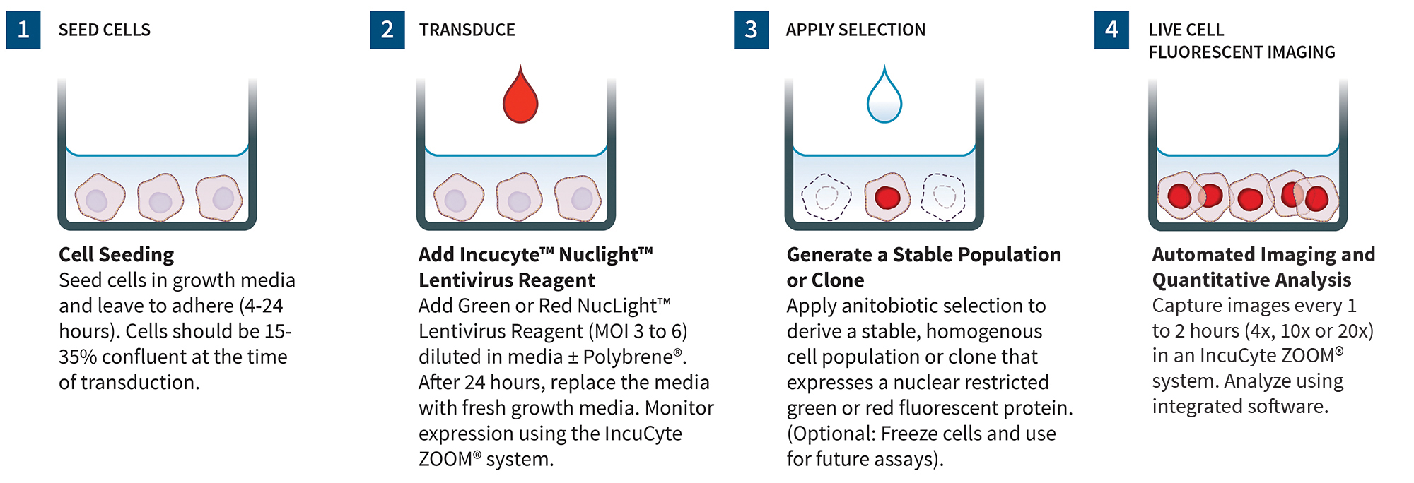 IncuCyte® NucLight Lentivirus Reagents