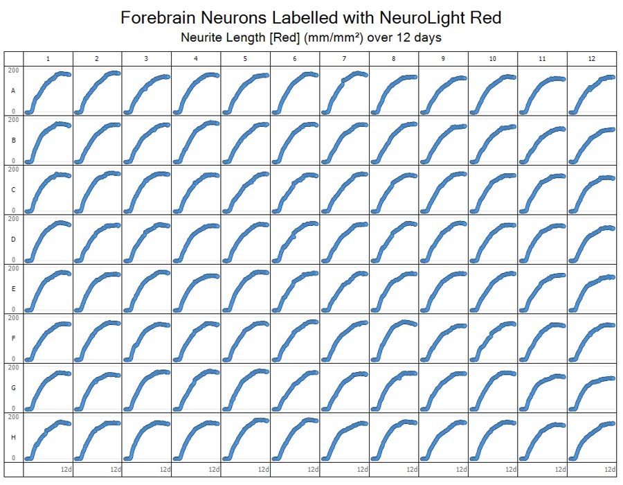 Microplate view of neurite length changes over time for all wells in a 96 well plate