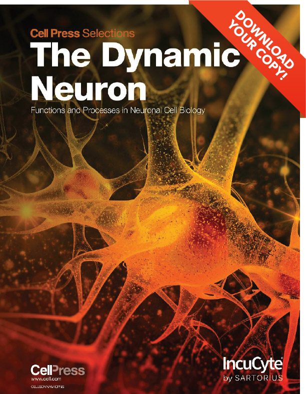 The Dynamic Neuron Cell Press Selection