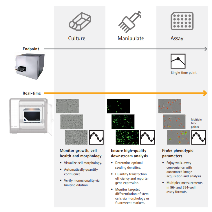 Cell Culture Workflow