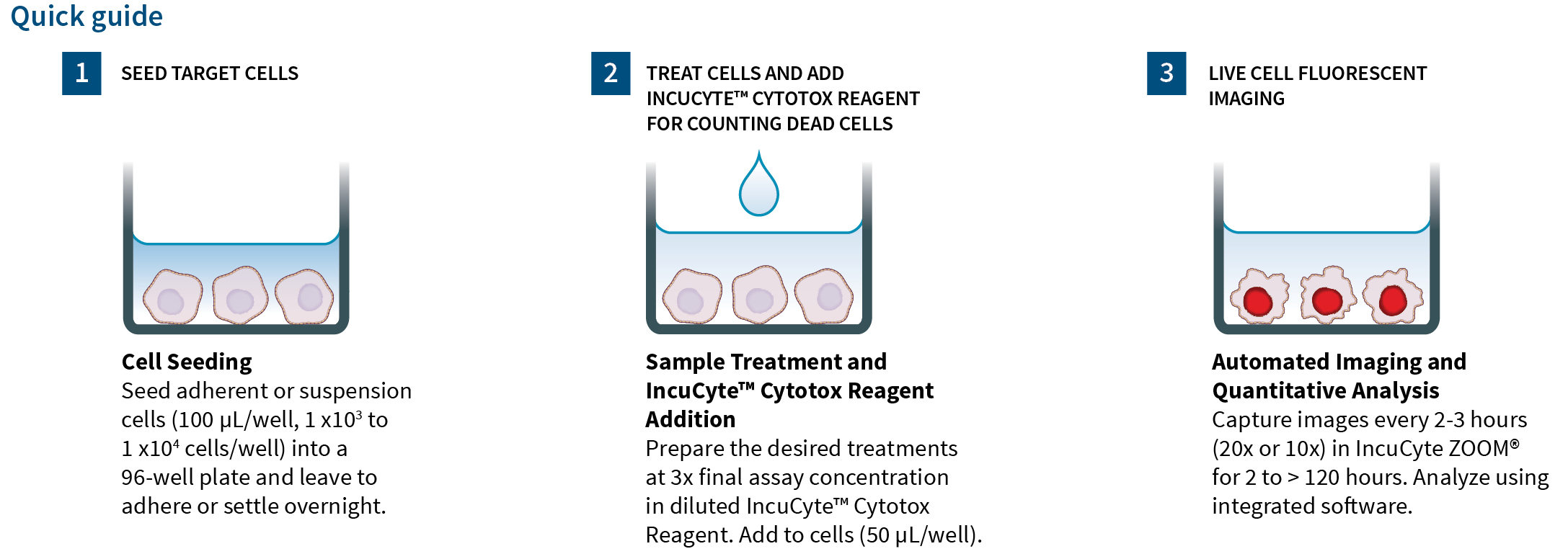 IncuCyte® Cytotox Red Reagent for counting dead cells
