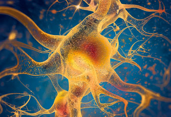 neuronal cell health
