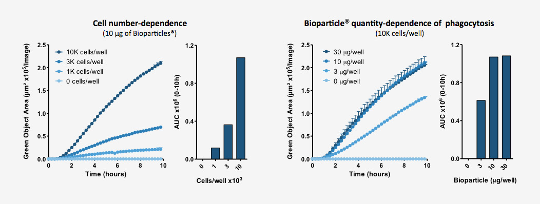 Quantification of phagocytosis is cell number- and Bioparticle dependent