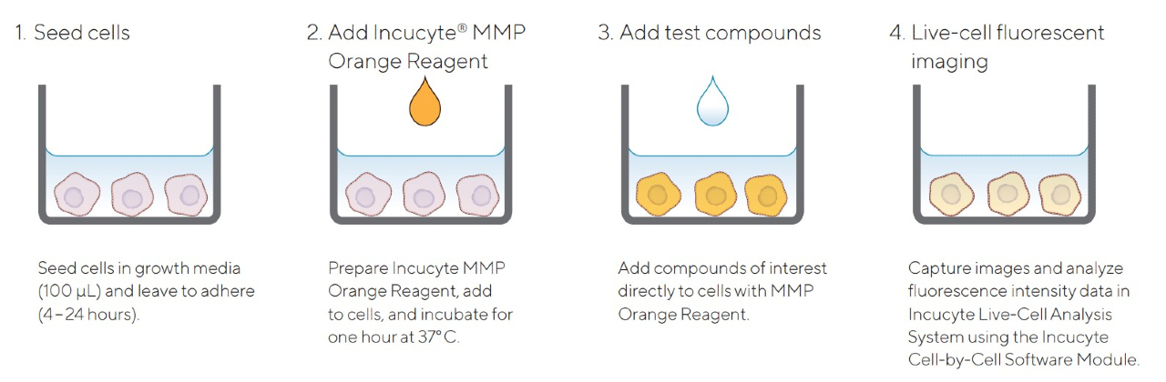 MMP Orange Reagent Quick Guide