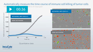 video immune cell killing