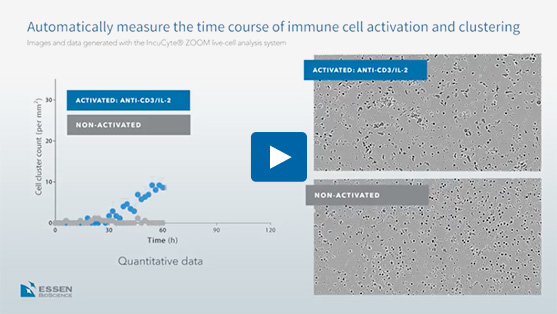 IncuCyte® immune cell clustering & proliferation assays