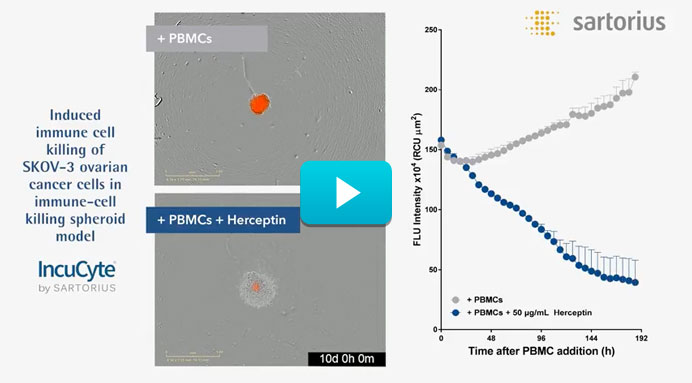 Video Immune Cell Killing Spheroid